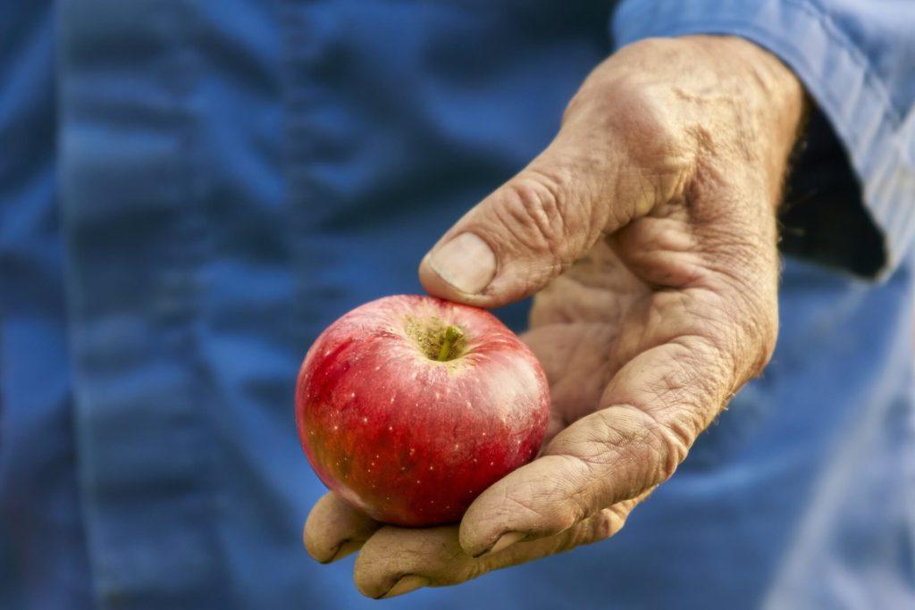 Regionale Lebensmittel: Äpfel direkt vom Bauer